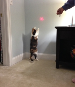 Miko chasing a red light on the wall